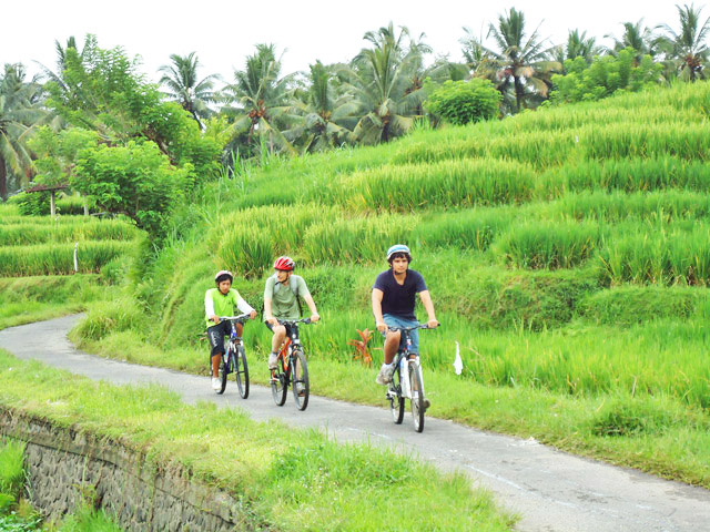 cycling-car-rental-in-bali