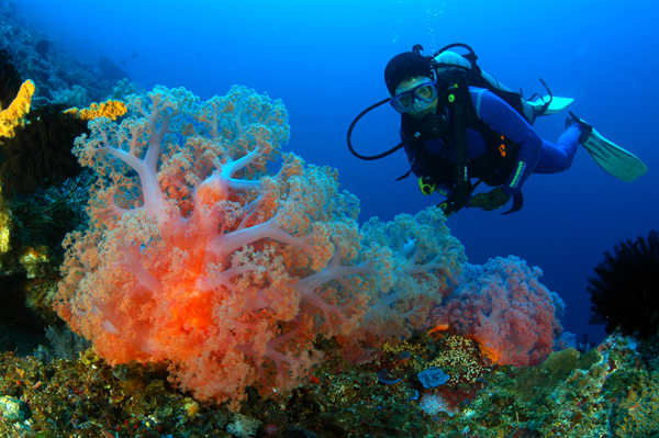 diving_amed-transport-in-bali
